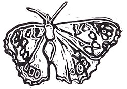 Brown Butterfly linocut